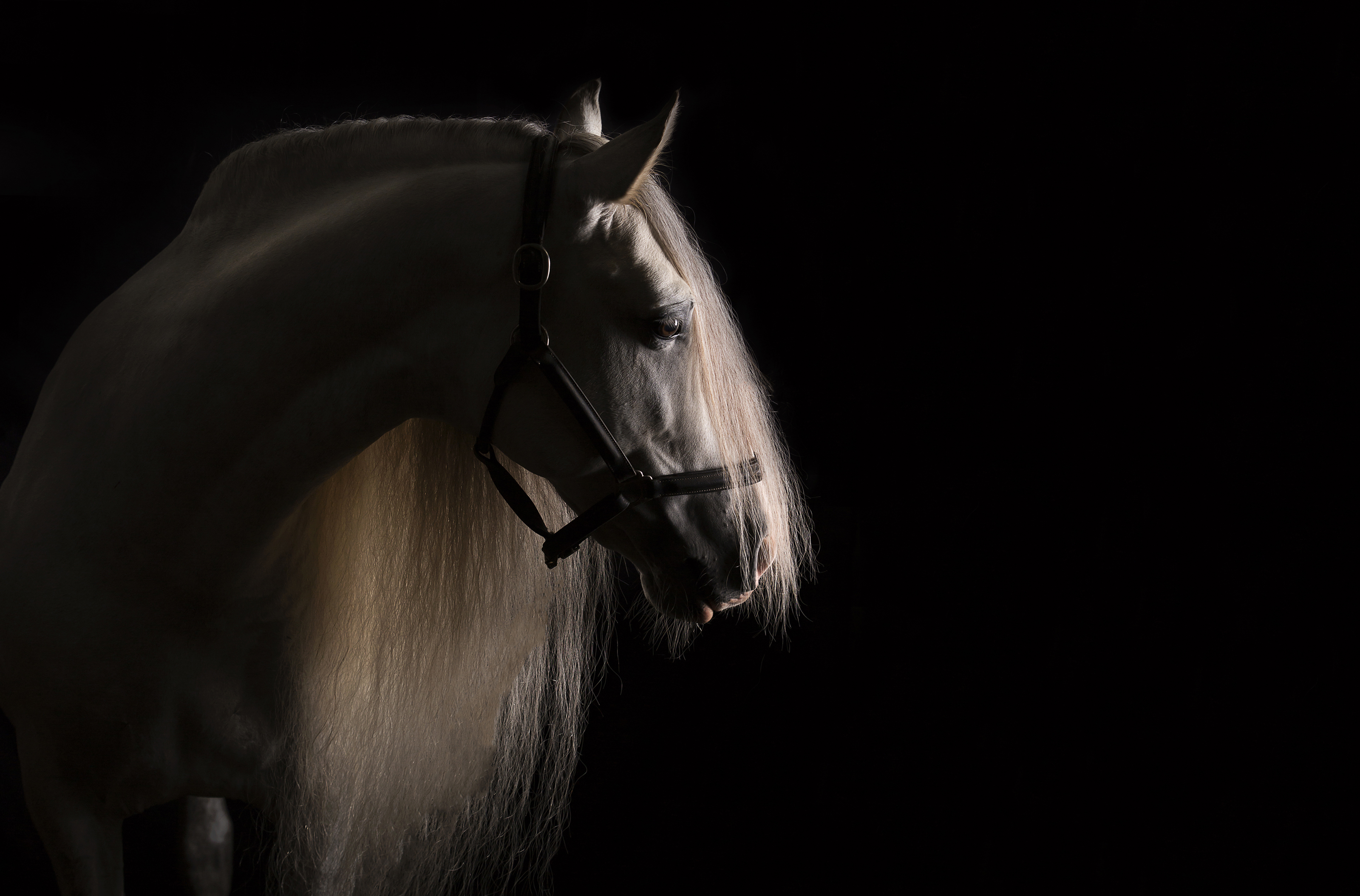 Fine Art Equine Photography Why Should I Invest Equus Photographyequus Photography