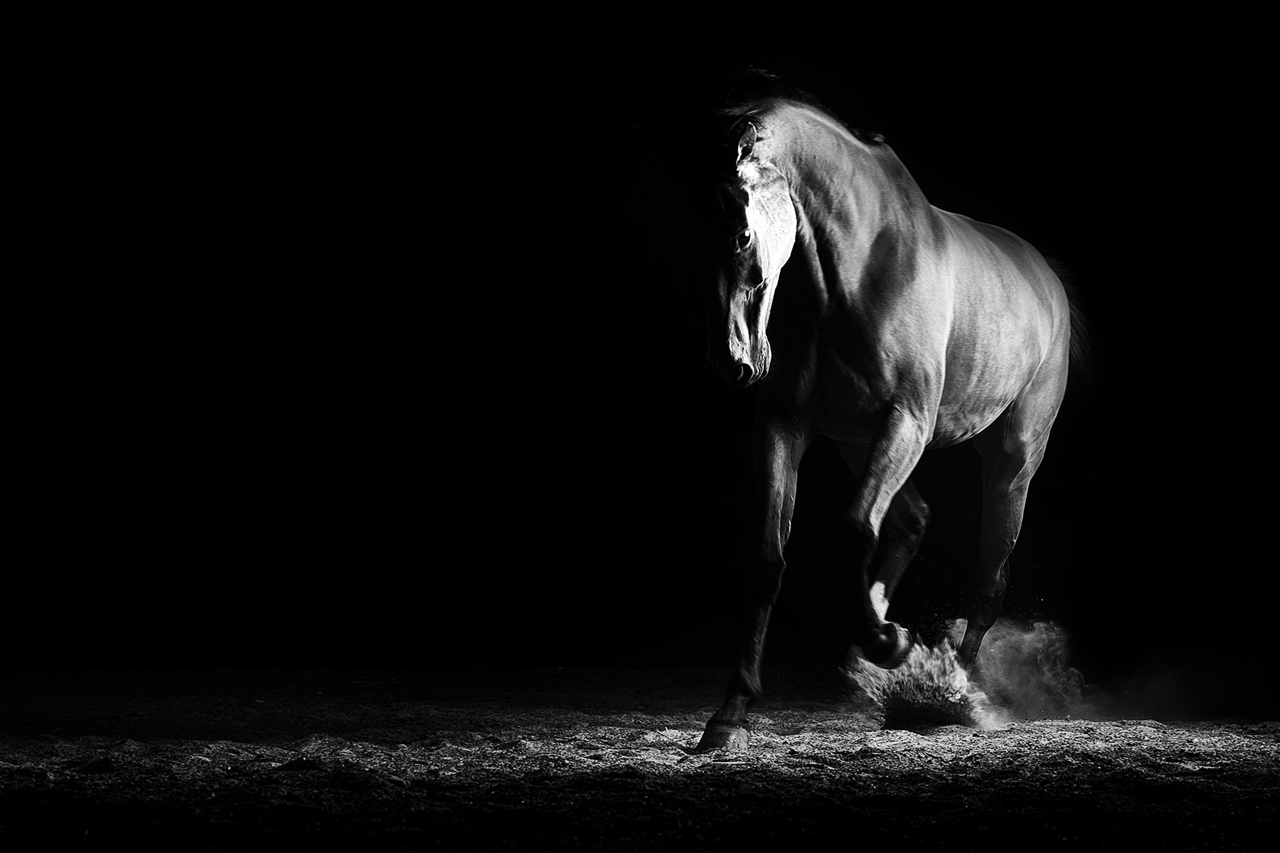 Black and white image of a Thoroughbred horse trotting